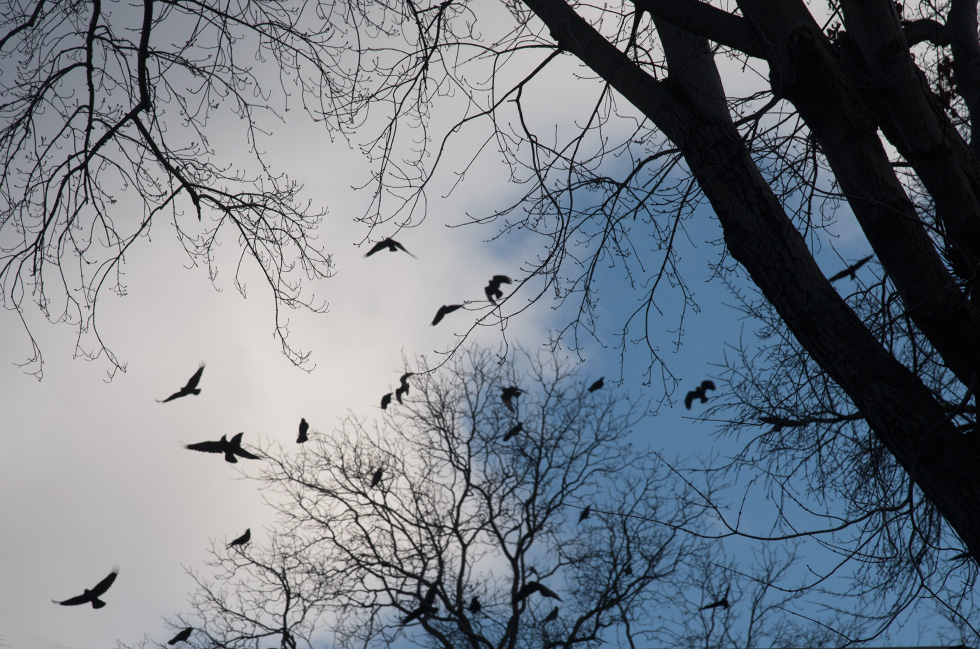 Crows  on the Pike, Crow Funeral